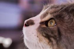 Wildlife EMJ Fotografix